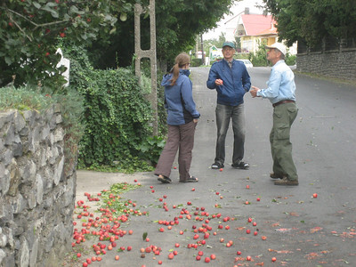 In the region around Lake Balaton the trees were loaded with fruit. Hundreds of apples were just lying on the road.