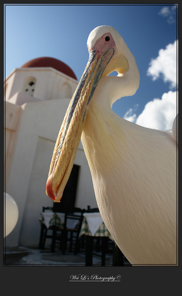 Mykonos, one of the three famous pelicans
