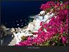 Santorini, OIA, greece
