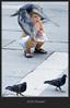 Venice, hello, pigeon