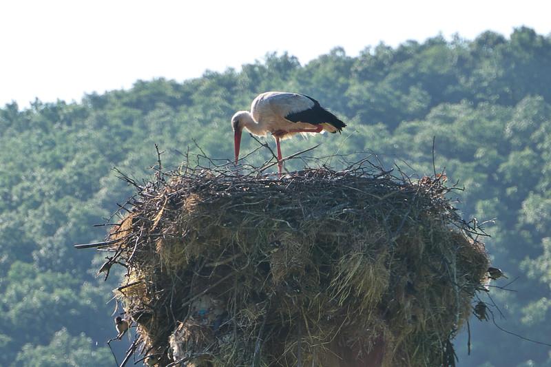On the way to Belogradchik we spot a stork on its nest.