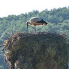 On the way to Belogradchik we spot a stork on its nest.