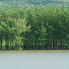 The water level of the Danube is very high as evidenced by the flooded banks and trees in the water.