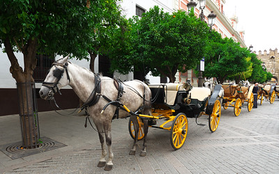 Carriages near the Cathedral