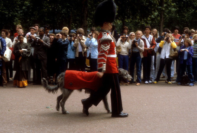 Guard and Irish Wolfhound