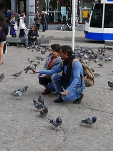 Lots Of Pigeons