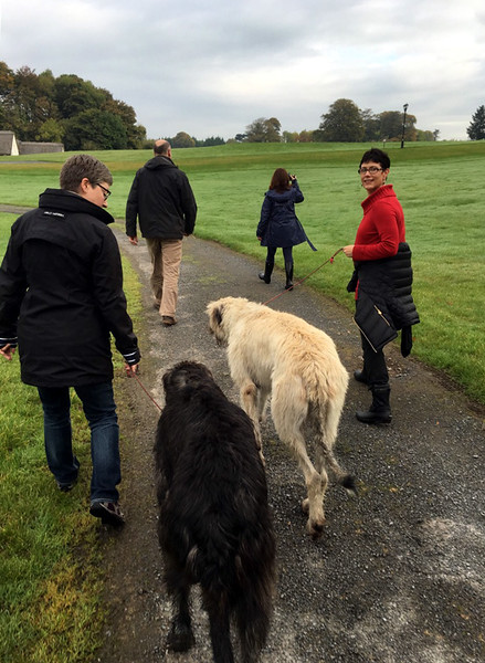 A walk with the two Irish Wolfhounds, Cronan (the dark one) and Garvan, who Robin walks down the path