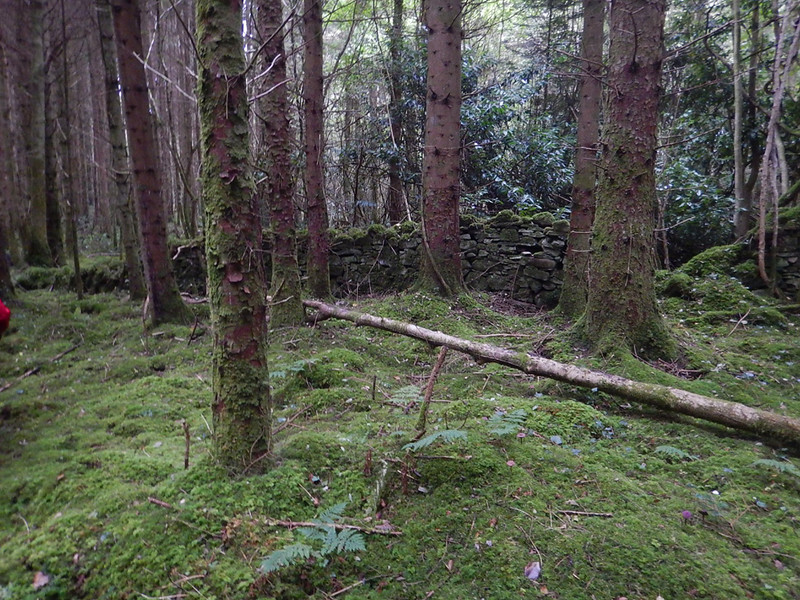 Mossy undergrowth covers everything, including an old stone wall in the woods