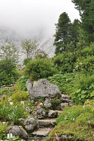 """the """"old rocks""""in the rock garden"""