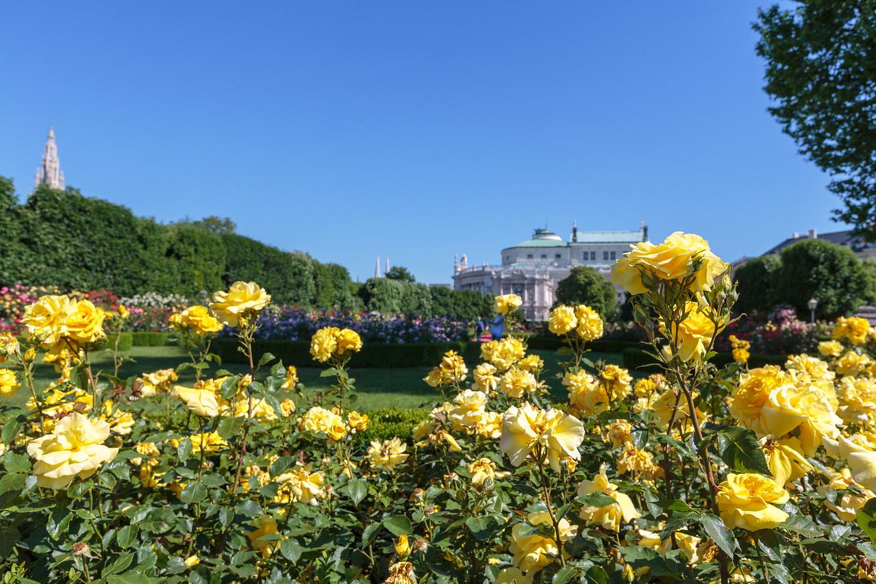 Roses, Volksgarten