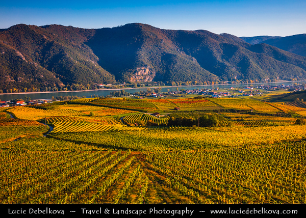 Europe - Austria - Österreich - Lower Austria - Wachau Valley - UNESCO World Heritage Area - One of Austria's most established and notable wine regions - Weißenkirchen in der Wachau - Weissenkirchen on Danube River & Surrounding Vineyards - Rows of grape bearing vine plantation for winemaking during autumn time with fall warm changing colors