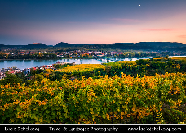 Europe - Austria - Österreich - Lower Austria - Wachau Valley - UNESCO World Heritage Area - One of Austria's most established and notable wine regions - Krems an der Donau - Historical riverside town & Vineyards - Rows of grape bearing vine plantation for winemaking during autumn time with fall warm changing colors