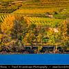 Europe - Austria - Österreich - Lower Austria - Wachau Valley - UNESCO World Heritage Area - One of Austria's most established and notable wine regions - Vineyards - Rows of grape bearing vine plantation for winemaking during autumn time with fall warm changing colors