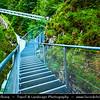Europe - Austria - Österreich - Tyrol - Tirol - Leutasch Gorges - Leutaschklamm - 75 m deep gorge with new modern steel footbridge