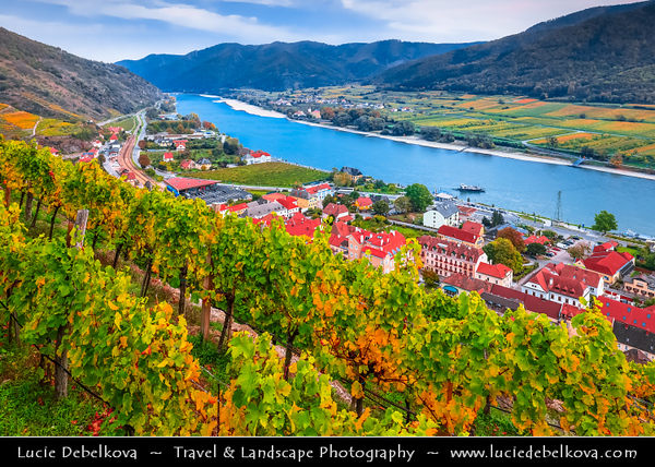 Europe - Austria - Österreich - Lower Austria - Wachau Valley - UNESCO World Heritage Area - One of Austria's most established and notable wine regions - Spitz an der Donau - Market town on shore of Danube River & Vineyards - Rows of grape bearing vine plantation for winemaking during autumn time with fall warm changing colors