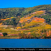 Europe - Austria - Österreich - Lower Austria - Wachau Valley - UNESCO World Heritage Area - One of Austria's most established and notable wine regions - Danube River Valley & Vineyards - Rows of grape bearing vine plantation for winemaking during autumn time with fall warm changing colors
