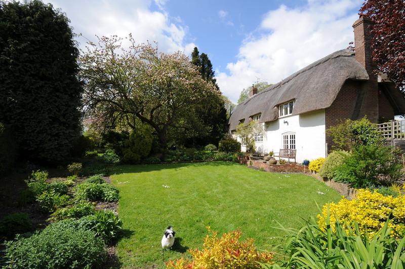 Cottage garden with puppy