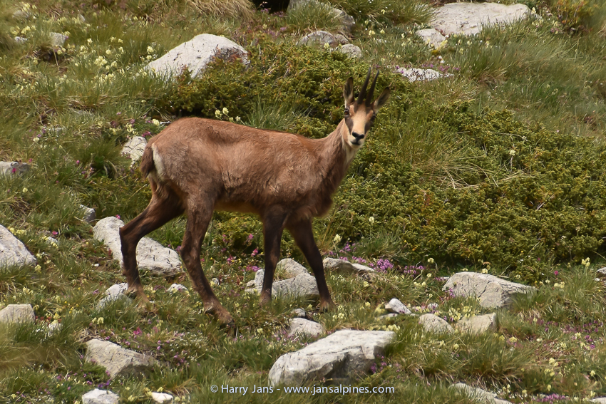 Pirin Mountains, Bansko,  Vihrenhut --> Mnt. Vihren, 2300m