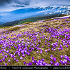 Eastern Europe - Bulgaria - България - Southwestern Bulgaria - Rila National Park - Rila - Рила - Highest mountain range of Bulgaria & the Balkans - Famous Seven Lakes area in altitude over 2000m above sea level with Large Crocus Fields in full bloom