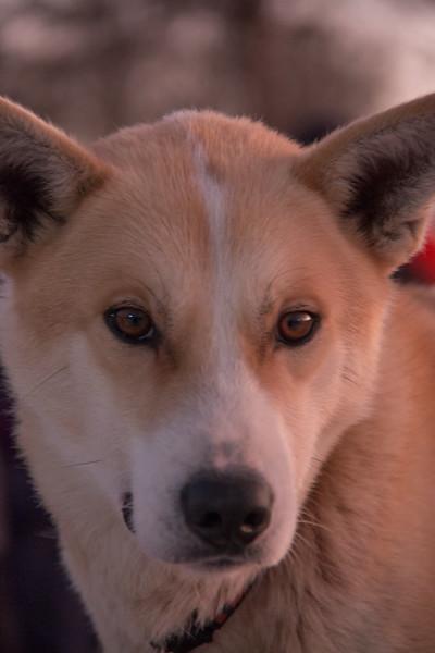 Tromso Villmarkssenter - Dog Sledding