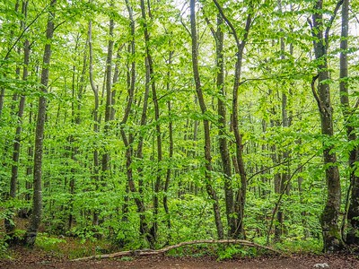 Lush forests in Plitvice National Park