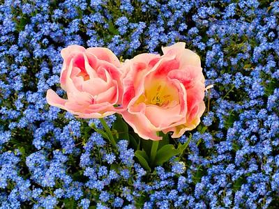 Tulips...I think