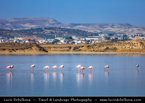 Europe - Cyprus - Κύπρος - Kýpros - Third largest island in Mediterranean Sea - Larnaca - Λάρνακα - Lárnaka - Larnaca Salt Lake - Αλυκή Λάρνακας - One of most important wetlands of Cyprus & one of important migratory passages - Greater flamingo
