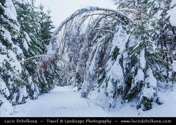 Europe - Czech Republic - Czechia - Krkonošský národní park - Krkonoše Mountains National Park - KRNAP - KPN - Giant Mountains - Frozen Winter Wonderland - Harrachov - Winter landscape along Kamenice river under fresh snow cover