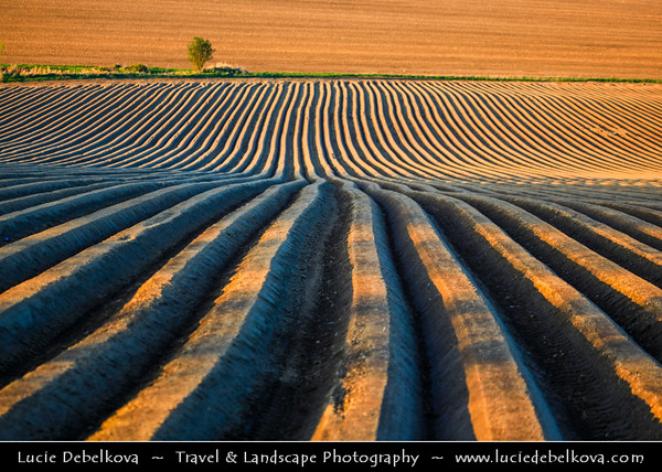 Europe - Czech Republic - Jižní Morava - South Moravia - Soft rolling hills during spring time