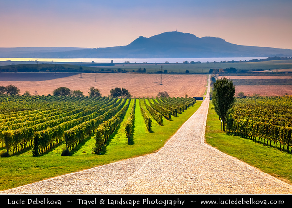 Europe - Czech Republic - Czechia - Jižní Morava - South Moravia - Sonberg Vineyards - Rows of grape bearing vine plantation for winemaking on Moravian wine path during autumn time with fall warm changing colors