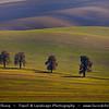 Europe - Czech Republic - Czechia - Jižní Morava - South Moravia - Moravské Toskánsko - Moravian Tuscany - Soft rolling hills and fields - Slavná Moravská pole - Iconic row of Chestnut trees