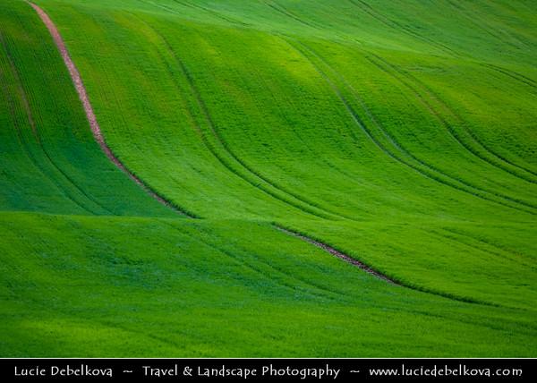 Europe - Czech Republic - Jižní Morava - South Moravia - Soft rolling, bright green hills during spring time