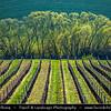 Europe - Czech Republic - Czechia - Jižní Morava - South Moravia - Moravské Toskánsko - Moravian Tuscany - Soft rolling hills and fields - Slavná Moravská pole behem jara - Fertile vineyards on Moravian wine path during spring time