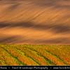 Europe - Czech Republic - Czechia - Jižní Morava - South Moravia - Moravské Toskánsko - Moravian Tuscany - Soft rolling hills and fields - Slavná Moravská pole - Autumn harvest time with fall warm changing colors