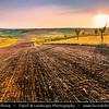 Europe - Czech Republic - Czechia - Jižní Morava - South Moravia - Moravské Toskánsko - Moravian Tuscany - Soft rolling hills and fields - Slavná Moravská pole - Sunrise
