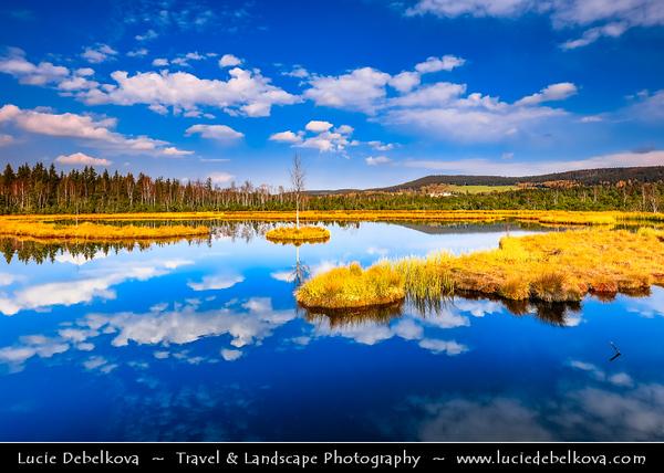 Europe - Czech Republic - Czechia - South Bohemian Region - Jižní Čechy - Šumava Národní park - Sumava National Park - Bohemian Forest National Park - UNESCO protected biosphere reserve - Chalupska Slat - Chalupska Moor - Largest peat Lake in Czechia