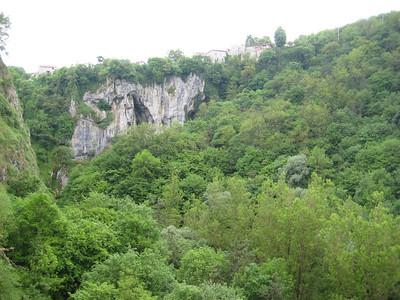 cliff_trees