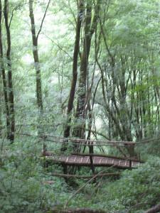 trees_bridge