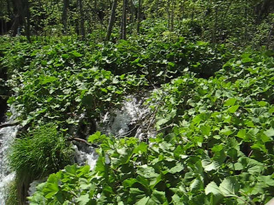 waterfalls_3