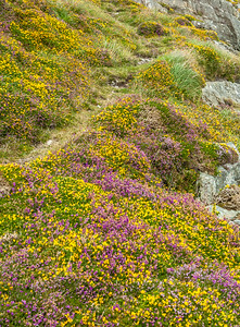 Colors of the Beara Peninsula