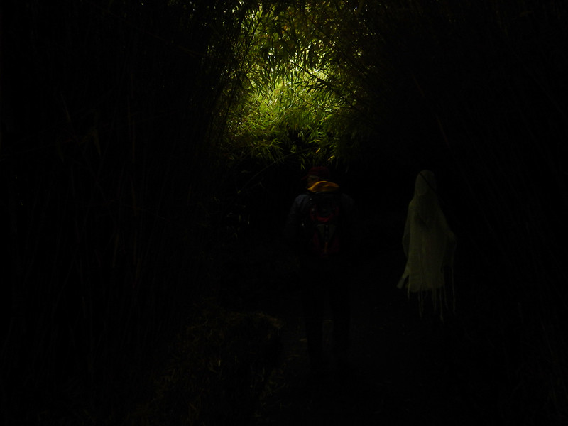 darker part of the maze with Todd and a ghostly Halloween Dementor at Alnwick Gardens