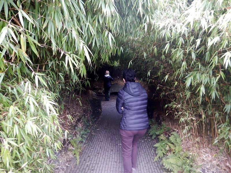 garden maze at Alnwick Gardens