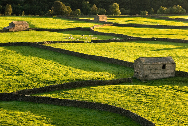 Traditional patchwork fields, barns and dry stone walls typical of the north of England taken in the late evening light