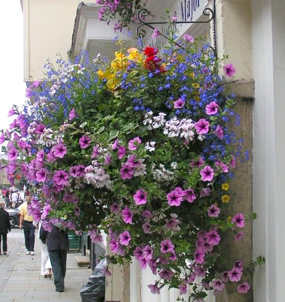 Flower pot, Salisbury England