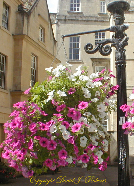 A flower basket in Bath England