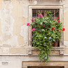 Stucco and Flowers