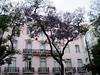 More acacias, Lisbon square