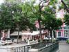 Pretty square, acacias in bloom, Lisbon