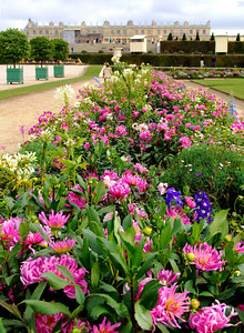 Flower Garden , Versailles, France