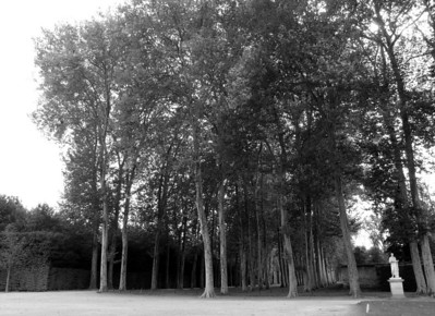 Trees in the garden at Versailles